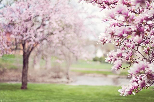 La primavera ya está aquí